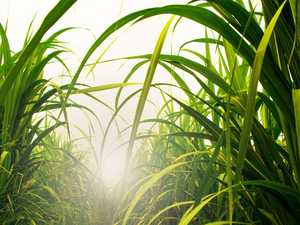 Better weather delivers stronger sugar crushing week