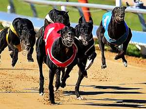 Fields, selections for Rockhampton greyhound meeting