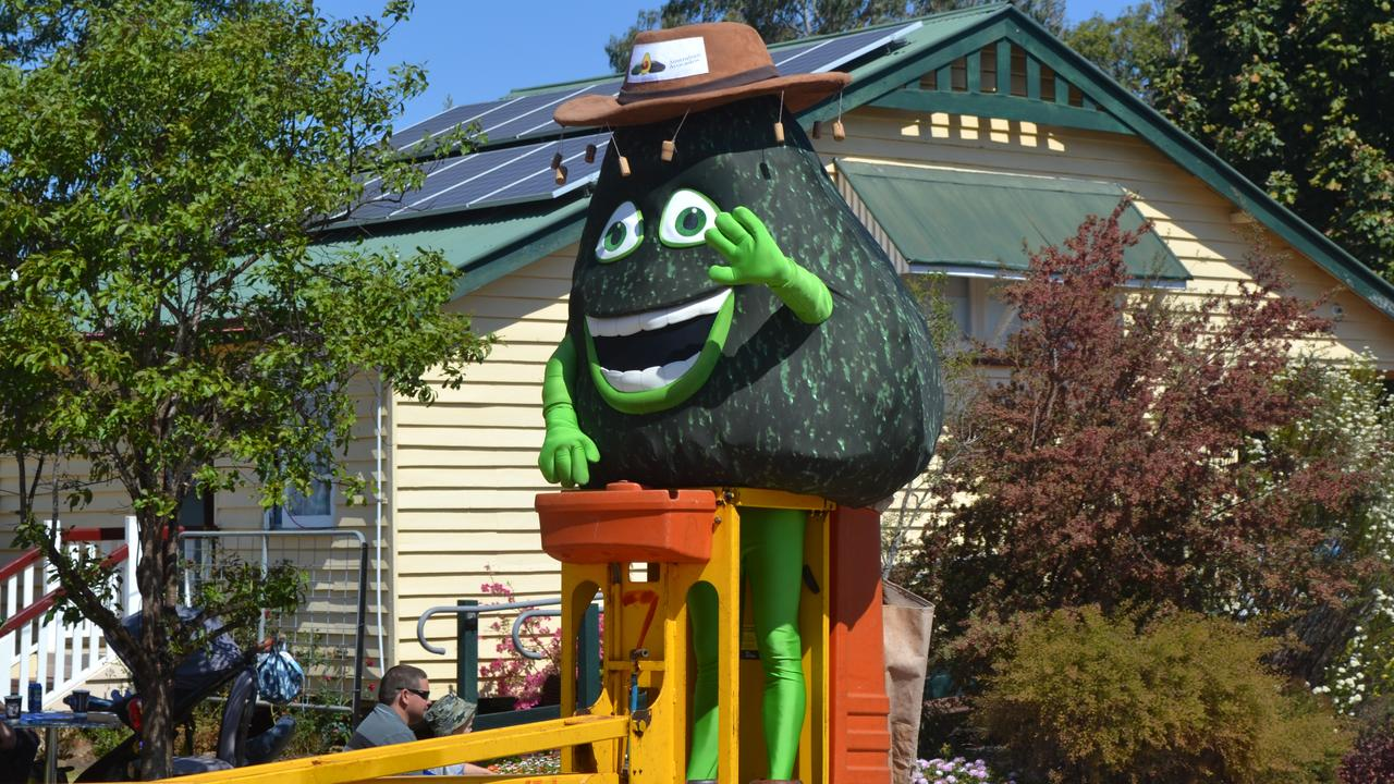 """This year's Blackbutt Avocado Festival was cancelled due to COVID-19 and now the """"Top Of The Blackbutt Range Bazaar"""", which set to run in its place, has suffered the same fate. File Photo."""