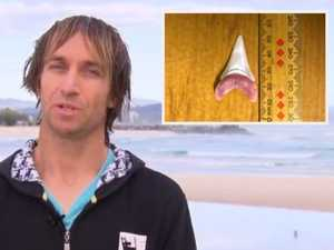 'I'm still shaky today': Hero surfer tells of shark attack drama