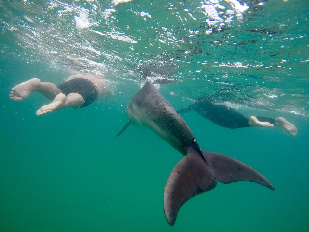Raoul Mulder's images taken from a morning swim at Point Roadknight on Sept 4