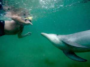 Peek-a-boo! Playful dolphin delights swimmers