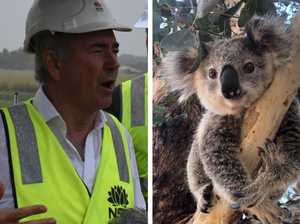 Nats stand strong over 'extraordinary' koala issue