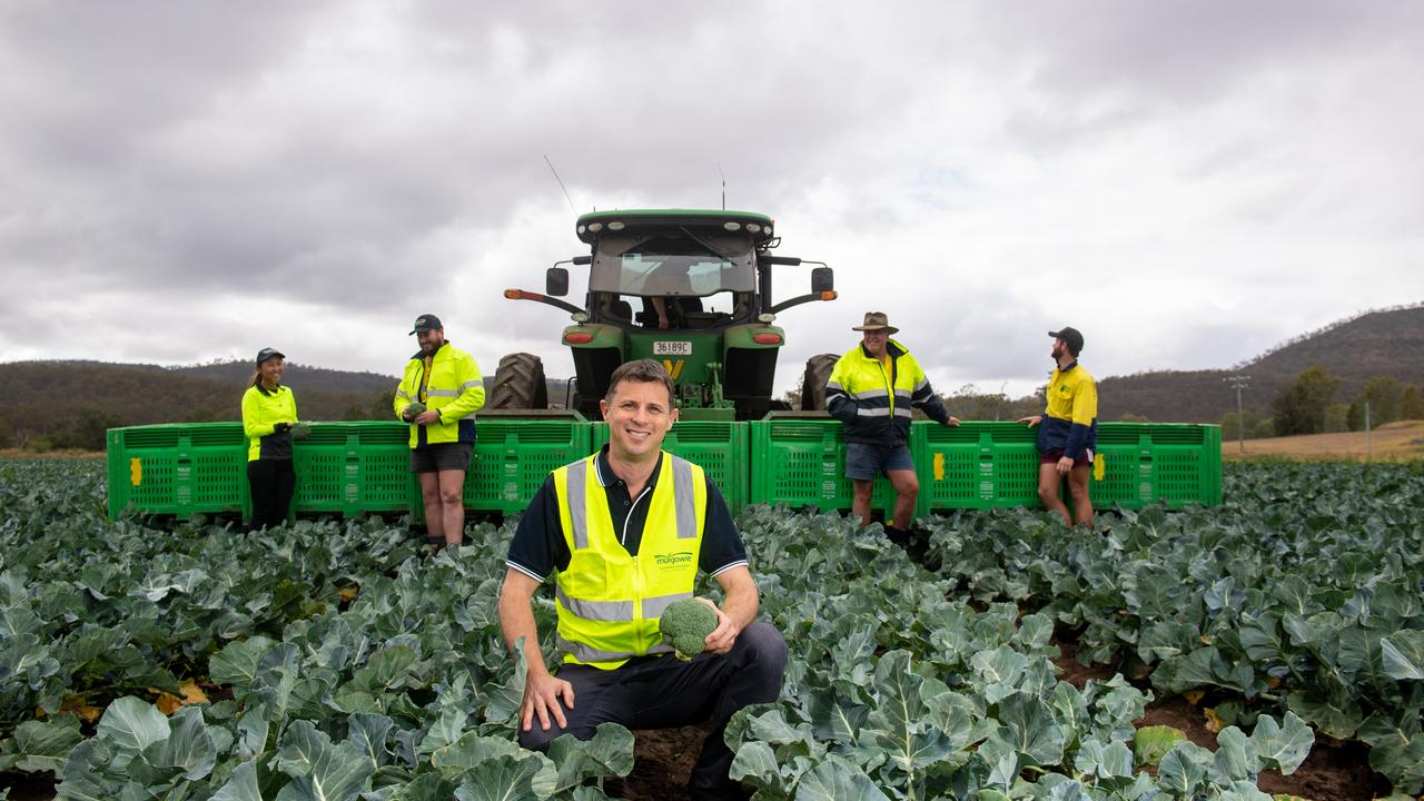 Mulgowie Farming Company CEO Fabian Carniel and staff in a broccoli field. PHOTO: ALI KUCHEL