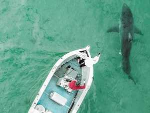 'You need a bigger boat': Boys brave shark-infested waters
