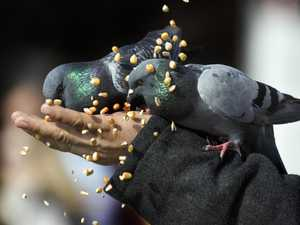 Woman faces $30k fine for feeding birds