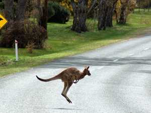 Man in hospital after motorbike and kangaroo collision