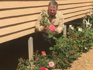 Bloomin' beauties: Why roses grow so well in CQ