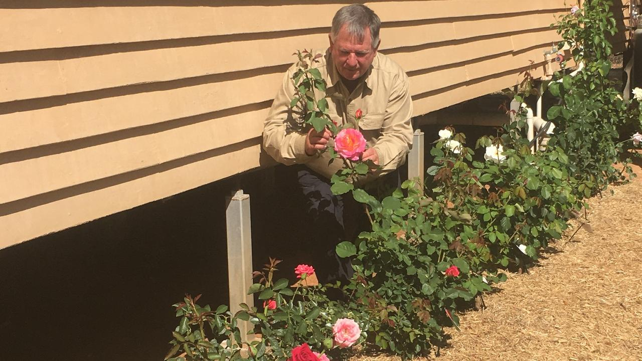 Gardening guru Neil Fisher in the rose garden at the Alpha Town Hall. The roses were planted in April this year and are all coming into full bloom now.