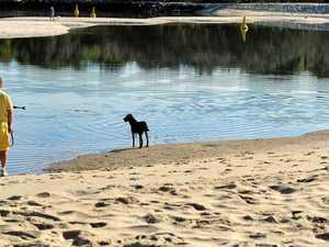 Dog owner barking mad at Noosa's lack of patrols