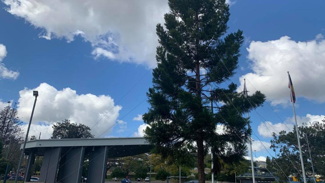 A fundraiser has been launched in an effort to finish off and light of Gympie's controversial living Christmas tree, which was shelved amid revelations the project was already $20,000 over budget.