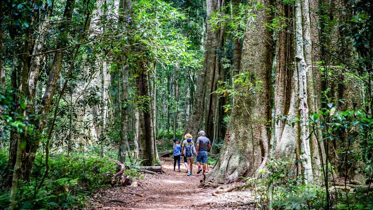 A popular walking trail in the Bunya Mountains. (Picture: File)