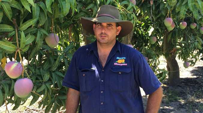 Fruit picking plan to lower debt proves a divisive issue
