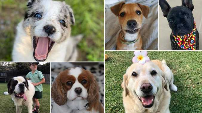 VOTE: The Coffs Coast's cutest dog for 2020