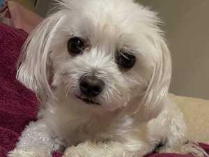 VOTE NOW: Gympie's cutest dog