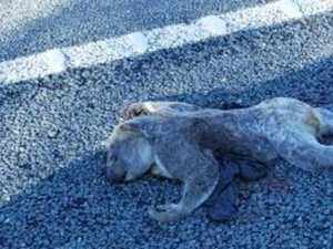 Deaths on Coffs' roads spark call to action