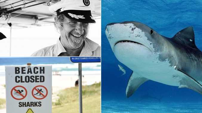 Shark programs labelled 'outdated' amid recent sightings