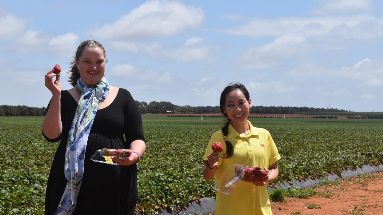 Berries Australia executive officer Rachel Mackenzie with SSS Strawberries' Gina Dang.