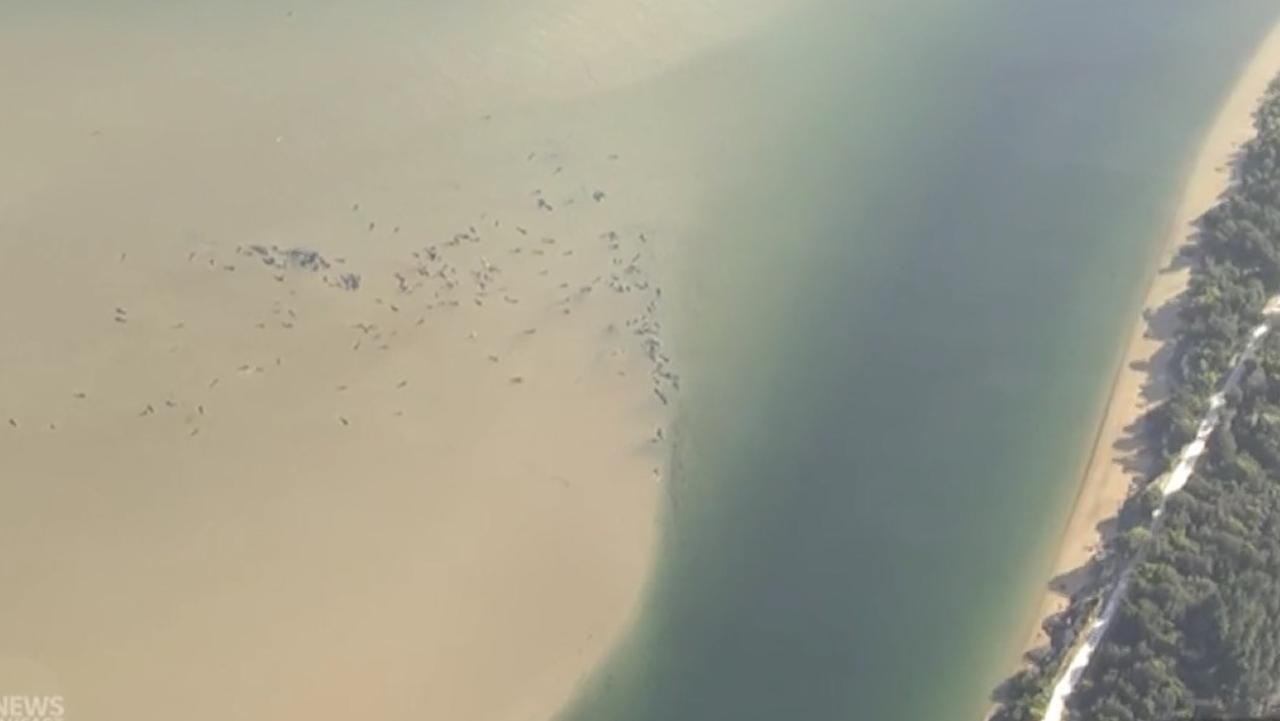 Aerials of stranded whales in Tasmania. Picture: ABC News