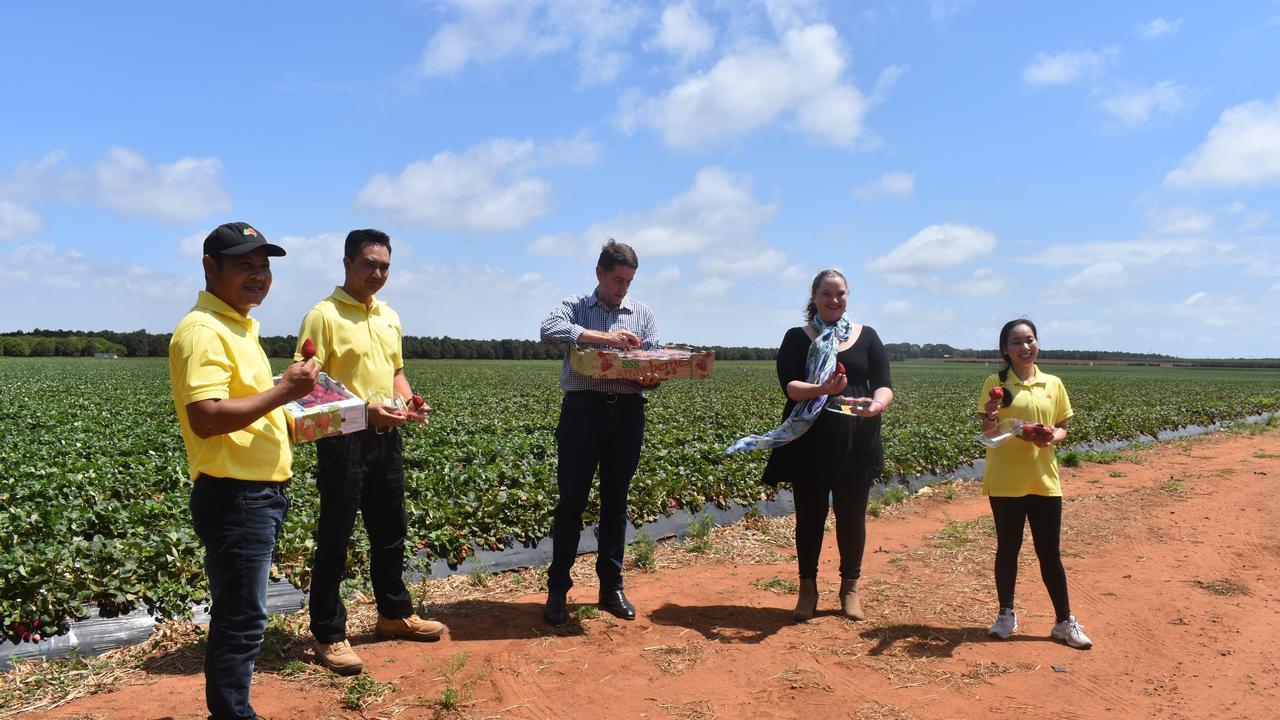 Victor Dang, Toan Nguyen, Treasurer Cameron Dick, Berries Australia's Rachel Mackenzie and Gina Dang.