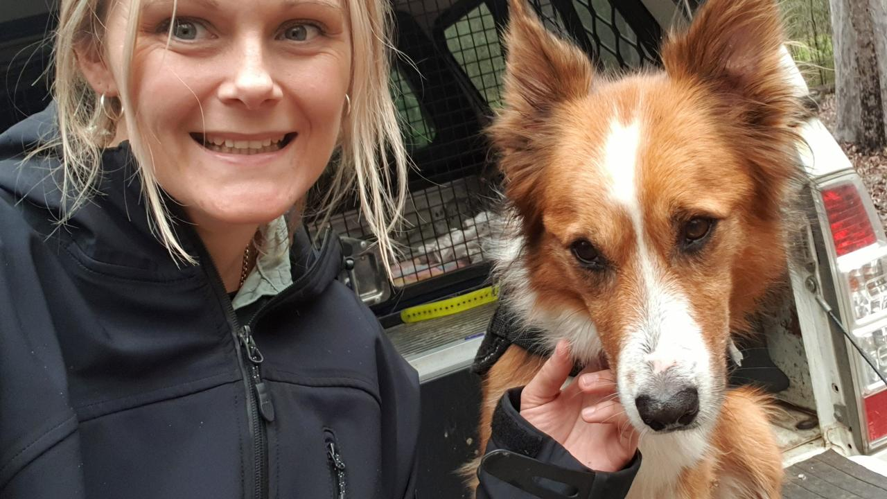 USC Animal Ecology graduate Jess Johnson with USC detection dog Baxter.