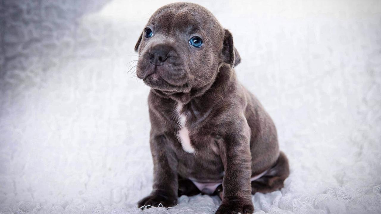Little Baxter.