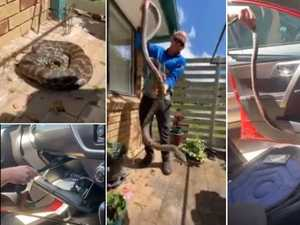 WATCH: Snake catcher blown away by size of python