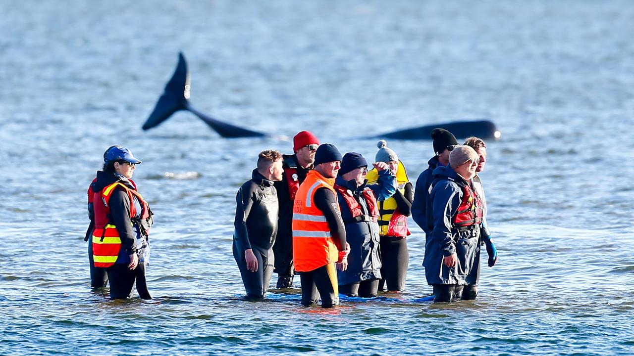 Exhausted whale rescuers after at the end of a long day trying to save some of the 270 or so pilot whales that became stranded at Macquarie Heads, Strahan. Picture: PATRICK GEE