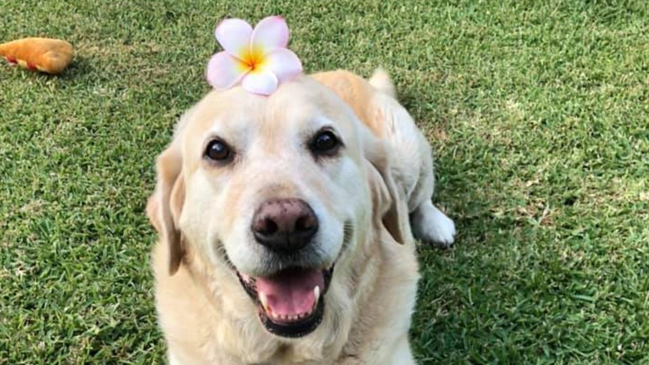 Chloe loves spring, says owner Sera Tolland.