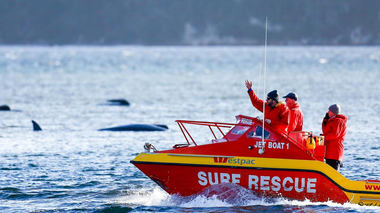 The Westpac rescue boat assist the rescue operation after about 270 pilot whales became stranded at Macquarie Heads at Strahan. Picture: PATRICK GEE