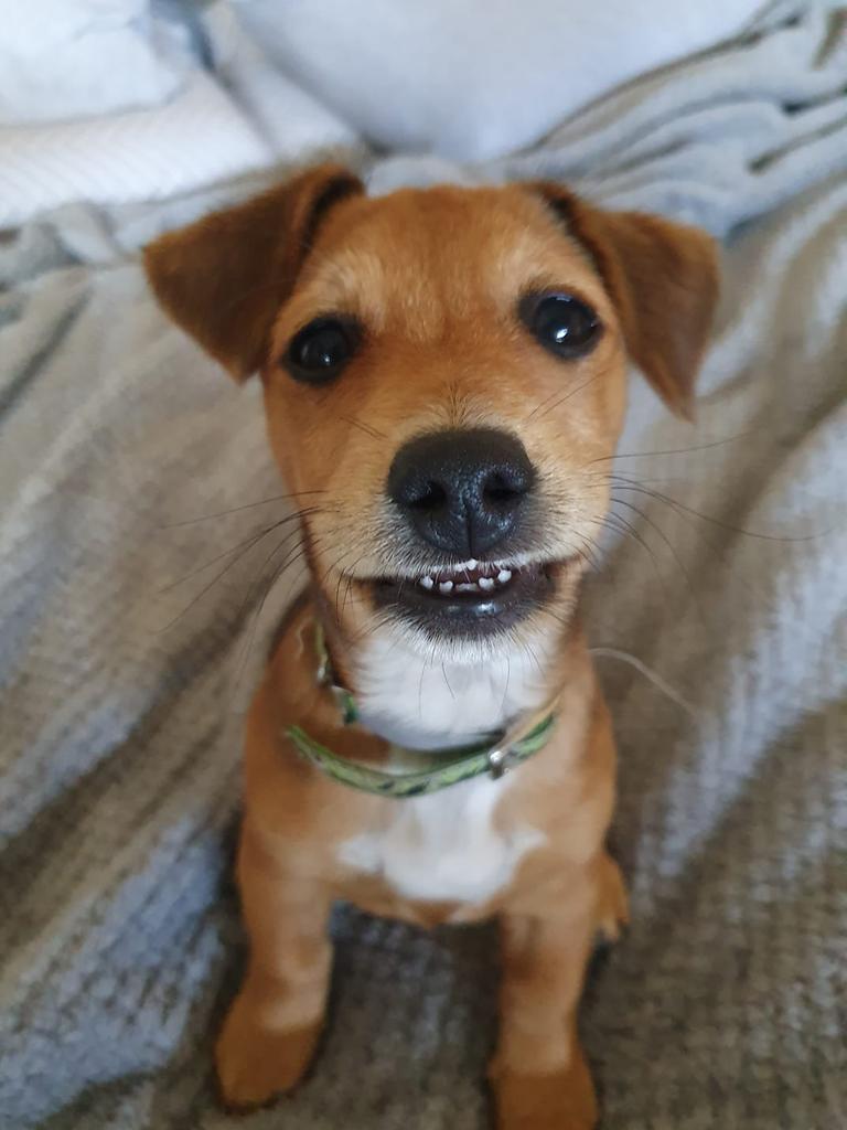 Dexter the little farm dog.