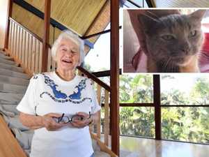 Fire survivor: Cat rises from ashes after living 'in ruins'