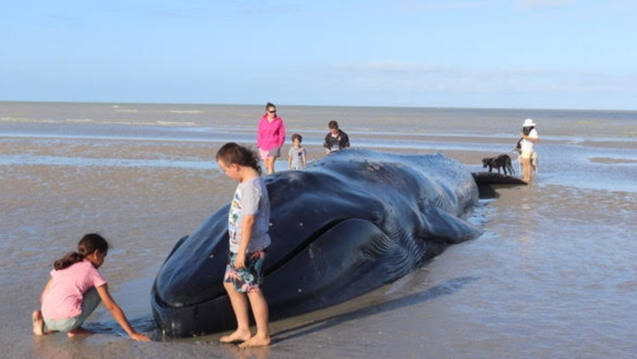 A remote Cape York town is desperately fighting to save the life of a young whale that became beached on the sand overnight.