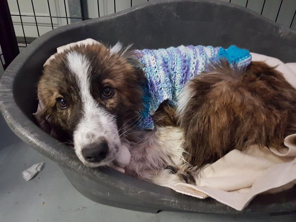 This dog was found at a hoarder's home in Williamtown.