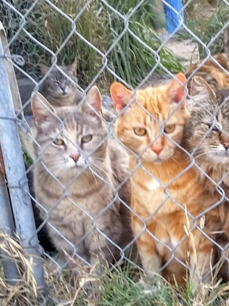 Cats and horses found in Vacy in the Hunter Region.