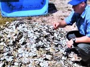 Recycling key to oyster-led river recovery