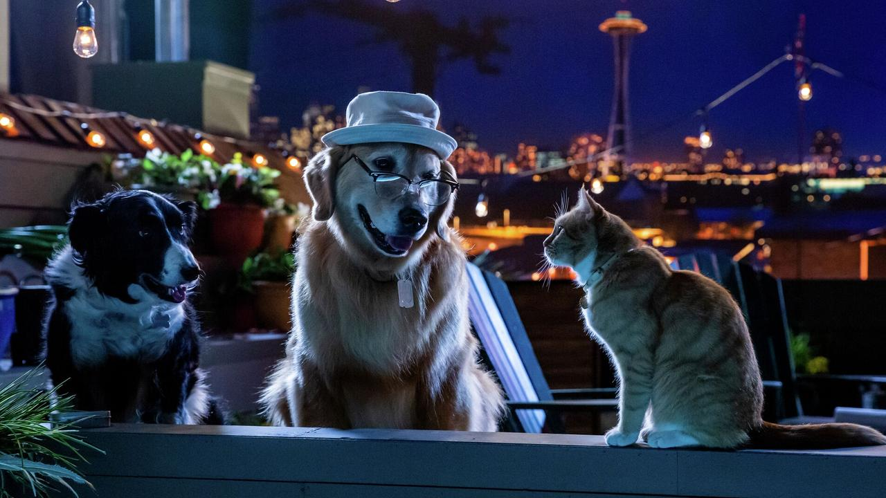 Cats & Dogs 3: Paws Unite. Picture: Warner Bros.