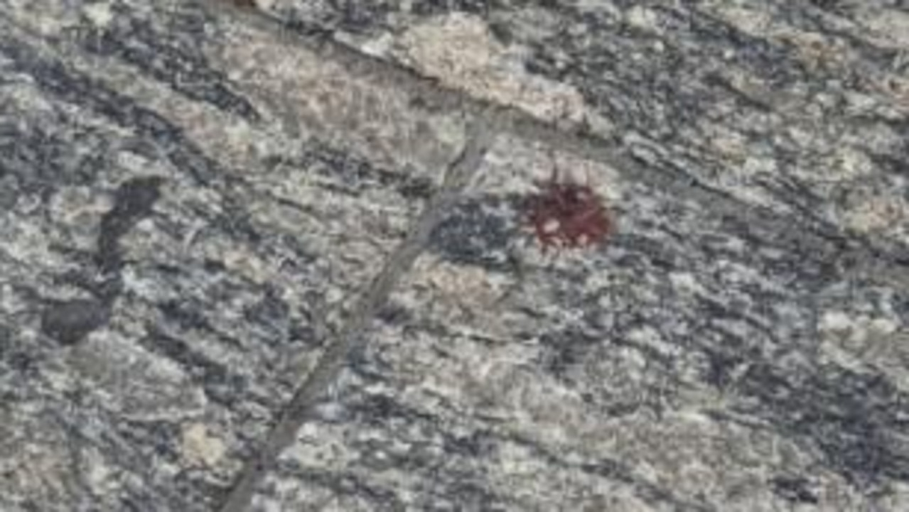 Blood seen on the ground in Queen Street Mall. Picture: Nathan Edwards