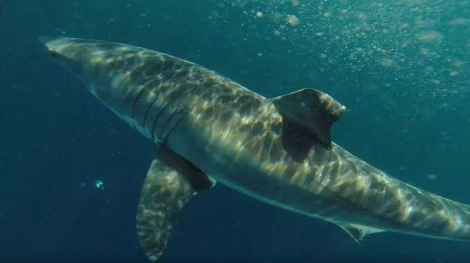 2.32m shark detected at South Ballina beach
