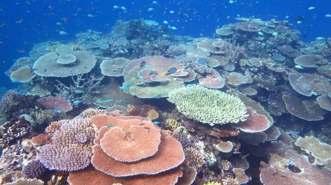 The inconvenient truth for Reef crusaders