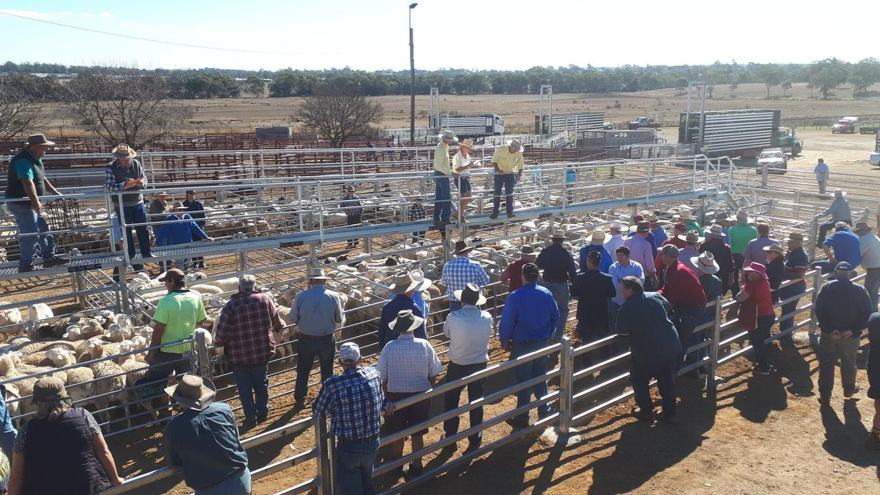 LIVESTOCK SALE: The new-look Warwick Saleyards. Photo: file