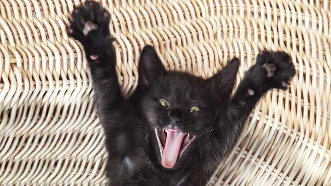 Man blames cat for damage in alleged DV case