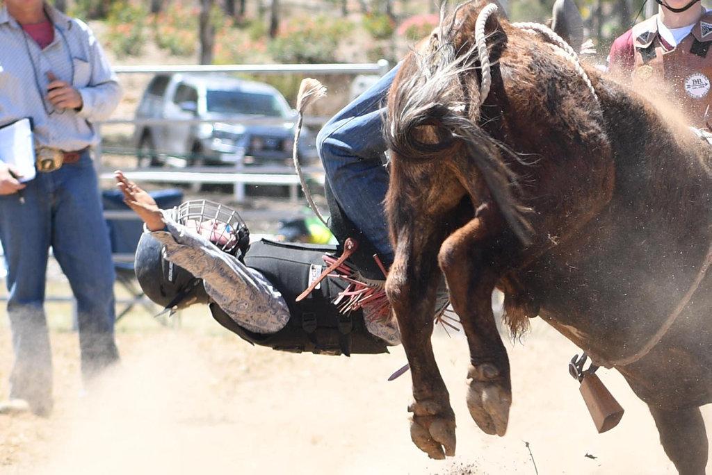 Image for sale: MT MORGAN JUNIOR RODEO 7-12 Mini Bull Ride: Billy Gallaway
