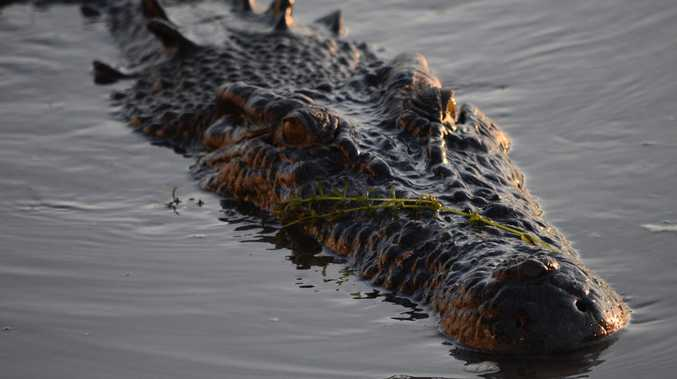 Clock ticks for dog-devouring croc at busy beach
