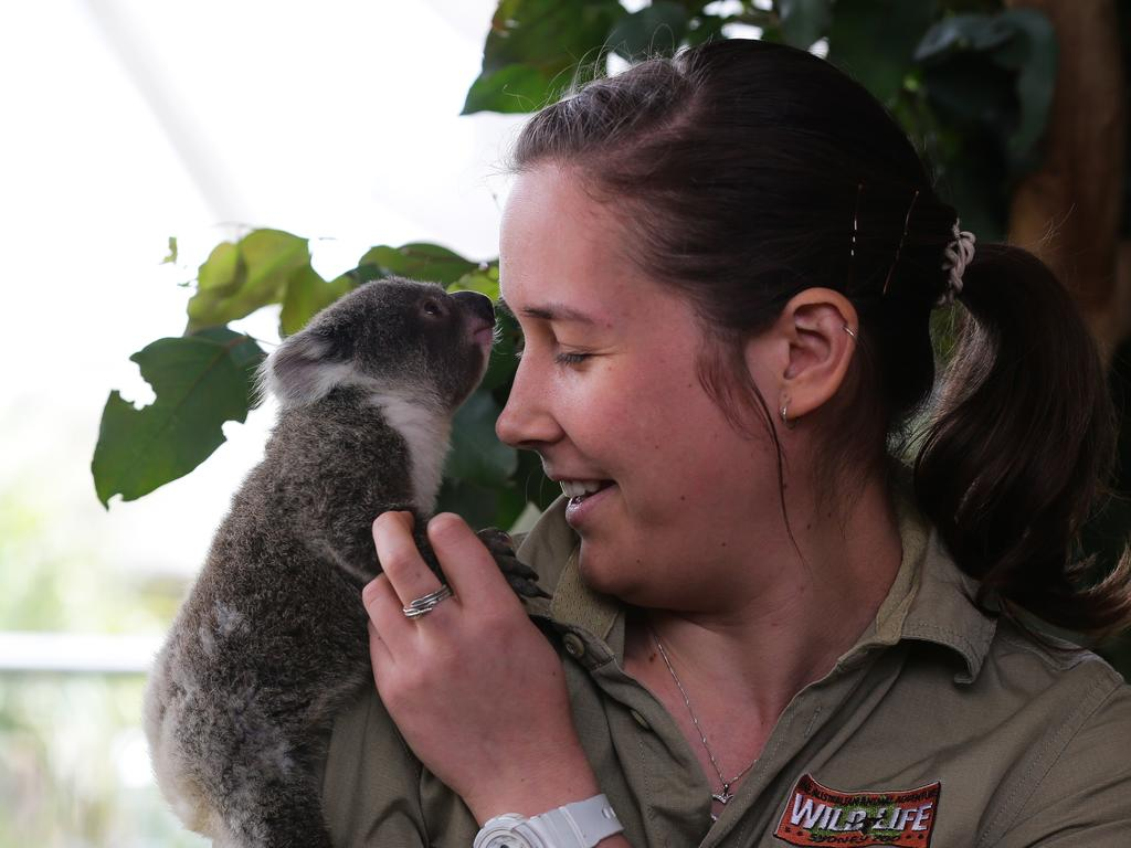 Sapphire climbing on head zookeeper Renee Howell. Picture: NCA Newswire/Gaye Gerard