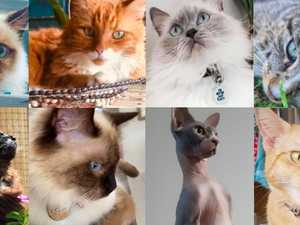 VOTE NOW: Who is Gympie's cutest cat?