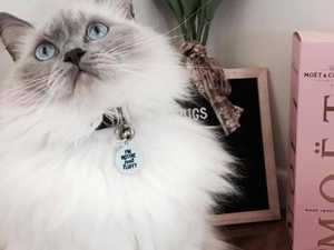 VOTE NOW: Who is the cutest cat in Gympie?