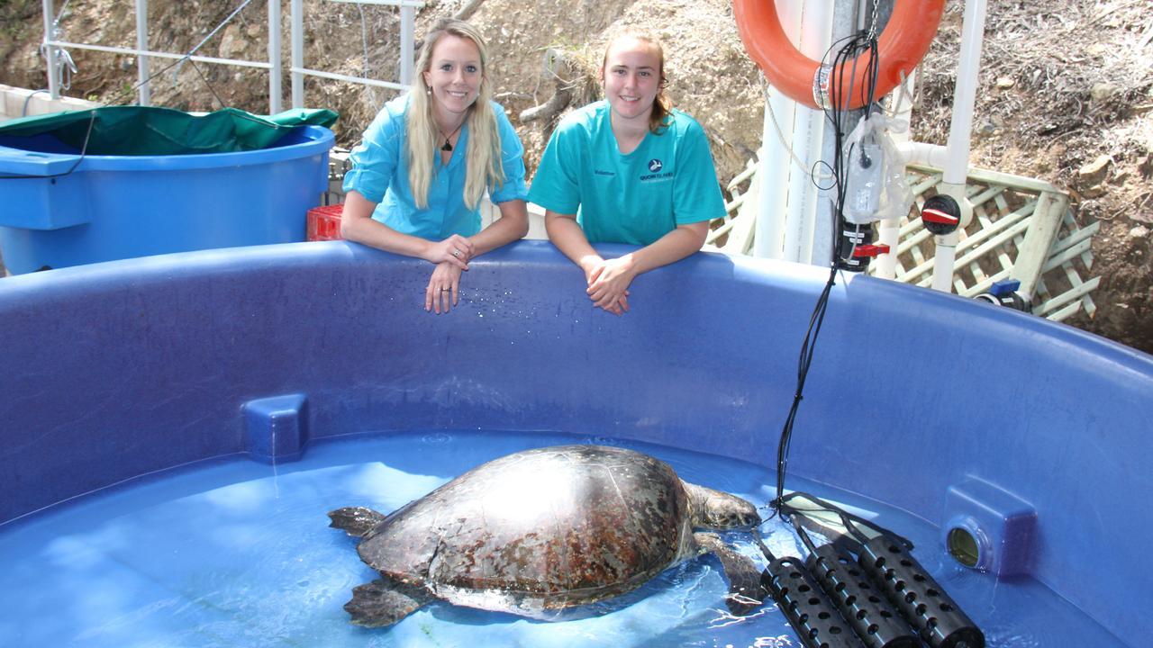 Amanda French and Madison Hellwege with a turtle in the Intensive Care tanks at the Quoin Island Turtle Rehabilitation Centre. Picture: Rodney Stevens
