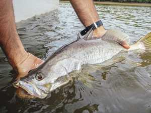 WATCH OUT: Fishing reforms you need to know about
