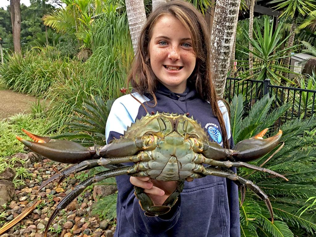 The Queensland Government has placed a limit on the number of mud crabs that can be caught.